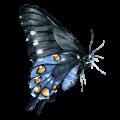 mariposa3